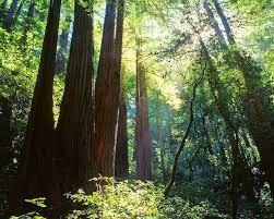 Redwood-Regional-Park