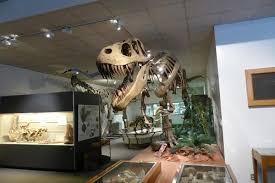Museum-of-Paleontology