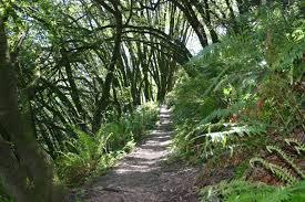 Huckleberry-Botanic-Regional-Preserve