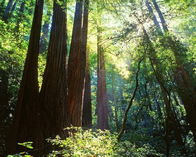Redwood Regional Park